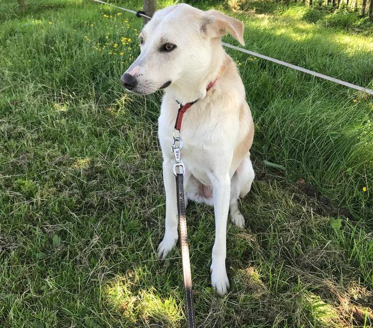 Het verhaal van Chicco, een Roemeense straathond